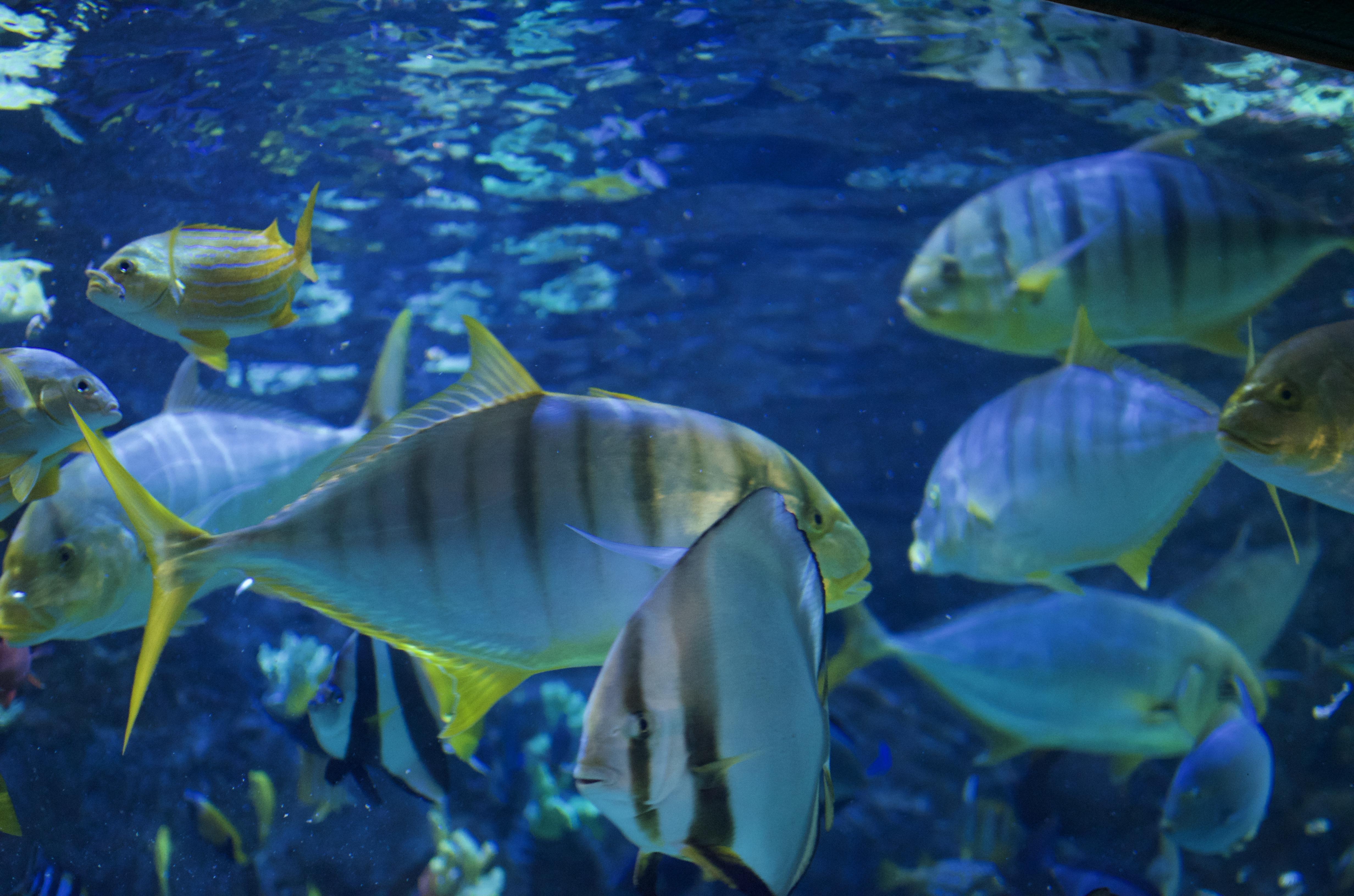 Tivoli Gardens aquarium
