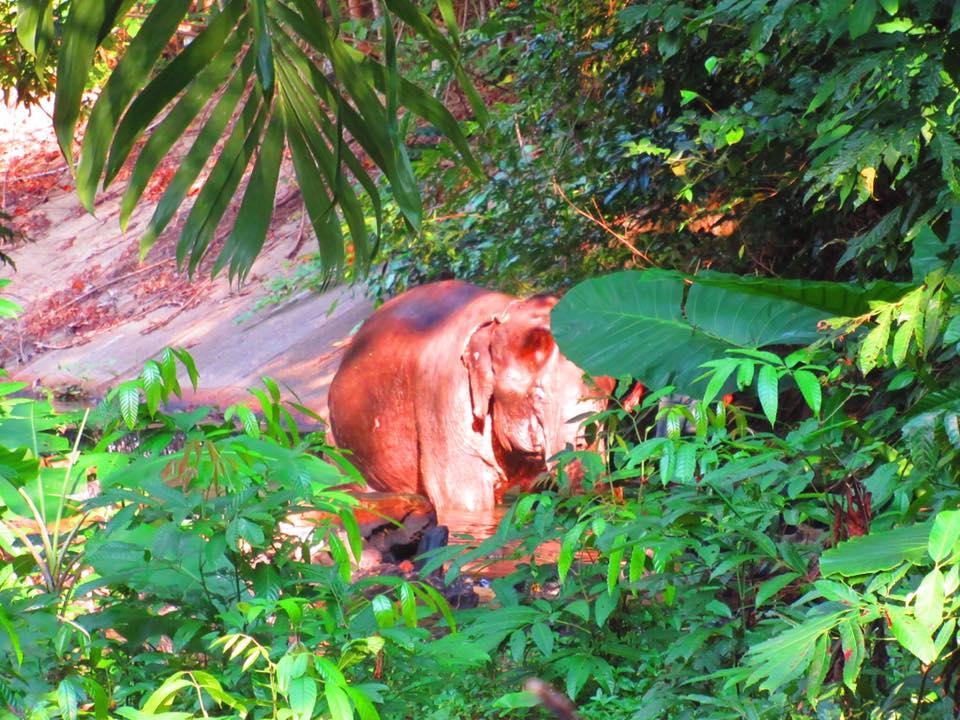 Elephant Koh Lanta